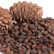 Cedar cones with nuts — Stock Photo