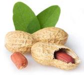 Fresh peanut — Stock Photo