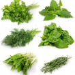 Stock Photo: Collection of fresh herbs