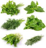 Coleção de ervas frescas — Foto Stock