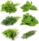 Collection of fresh herbs — Stockfoto