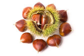 Chestnuts close-up — Stock Photo