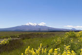 New Zealand volcanoes — Stock Photo