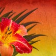 Stock Photo: Red orange yellow background with daylily