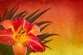 Red orange yellow background with daylily — Stock Photo