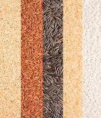 Set of rice — Stock Photo