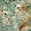 Stock Photo: Mold