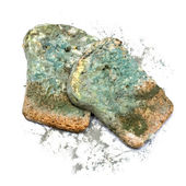 Mold bread — Stock Photo