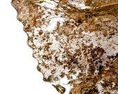 A leaf close-up — Stock Photo