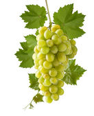 Green grape — Foto de Stock