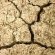 Stock Photo: Cracked arid soil