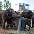 Elephants feeding in zoo — Stock Photo #12044427