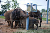 Elephants feeding in zoo — Stock Photo