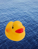 Rubber Ducky Toy — Stock Photo
