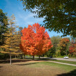 Stock Photo: Autumn Blaze in Michigan