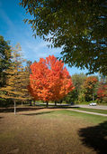 Autumn Blaze in Michigan — Stock Photo