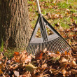 Rake and Bagging Leaves — Foto Stock