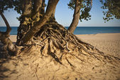 Lake Michigan Beach — Stock Photo