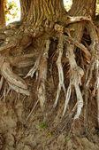 пляж так дерево — Стоковое фото