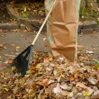 Bagging fall Leaves — Stock Photo