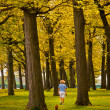 Walking Dog in Park — Stock Photo