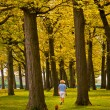 Stock Photo: Walking Dog in Park