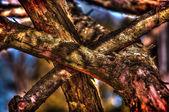 Autunno nel bosco — Foto Stock
