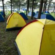 A group of tents in the pine forest - Stock Photo