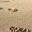 Dog Footprints on Sand — Stock Photo #12223246