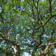 Tree branches — Stock Photo