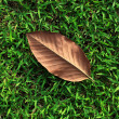 Stock Photo: Single Leaf on Green Grass