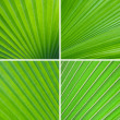 Set of green leaf background — ストック写真