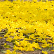 Yellow flowers on the ground — Stock Photo