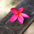 Plumeria on wood — Stock Photo