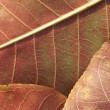 Abstract autumn leaf background — Stock Photo