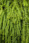 Closeup image of leaf of tropical fern — Stock Photo