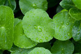 Closeup of green leaf with water drops — Stock Photo