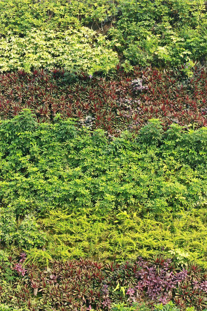 textura natural jard n vertical de la hoja verde foto