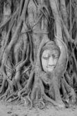 Buddha Head Statue in Banyan Tree, Thailand — Stock Photo