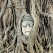 Buddha Head Statue in Banyan Tree — Stock Photo