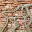 Root wood covered brick wall, Thailand — Stock Photo