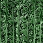 Palm leaf background — Stock Photo #38378193