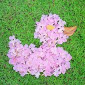 Flower arrangements in the shape of Duck — Stock Photo