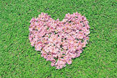 Pink flowers heart over green grass — Stock Photo
