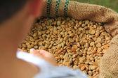 Coffee bean in hand — Stock Photo