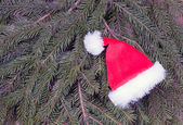 Santa's hat lying on spruce branches — Stock Photo