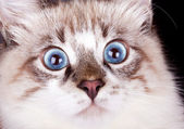 Young frightened cat — Stock Photo