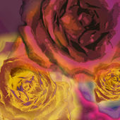 Background roses — Stockfoto