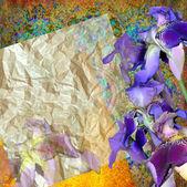 Flloral tasarım iris — Stok fotoğraf