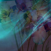 Floral background iris — Stock Photo